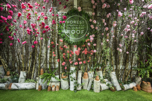 Spring at Forest2