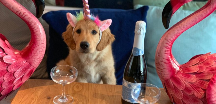 Dog with unicorn headband and a bottle of Prosecco - at Megan's
